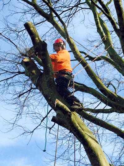 Tree Surgeon Stourbridge