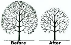 Tree Services Crown Reduction