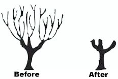 Tree Services Pollarding